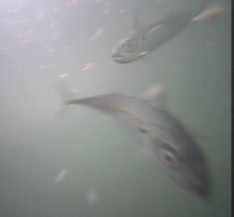 平潟港 水中写真03