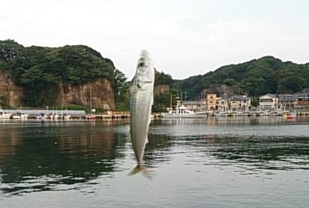 平潟港 釣果01