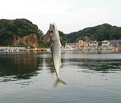 平潟港 釣果03