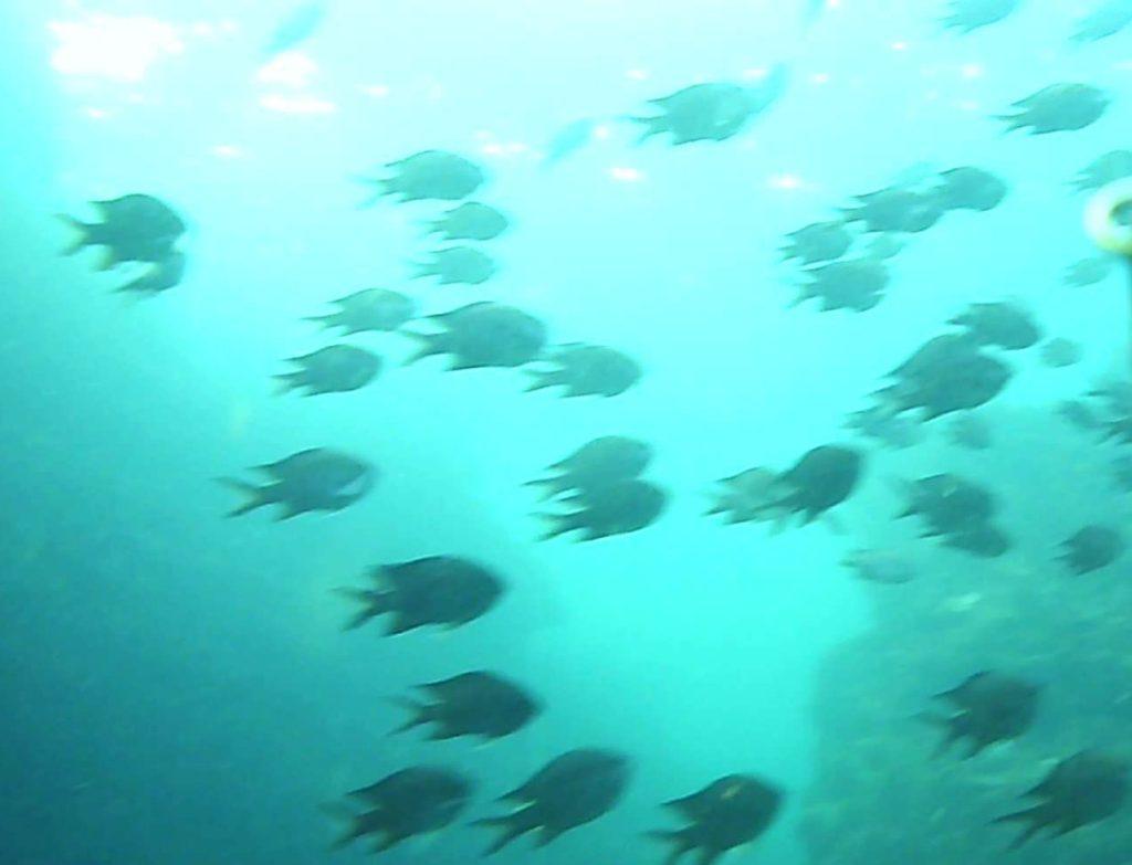 城ケ島 四畳半 水中写真02