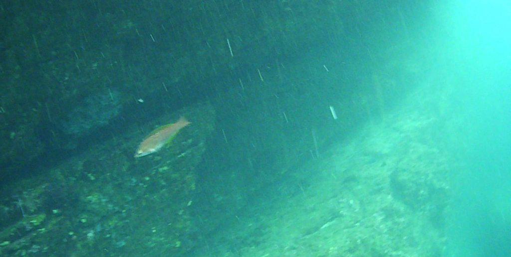 城ケ島 四畳半 水中写真06
