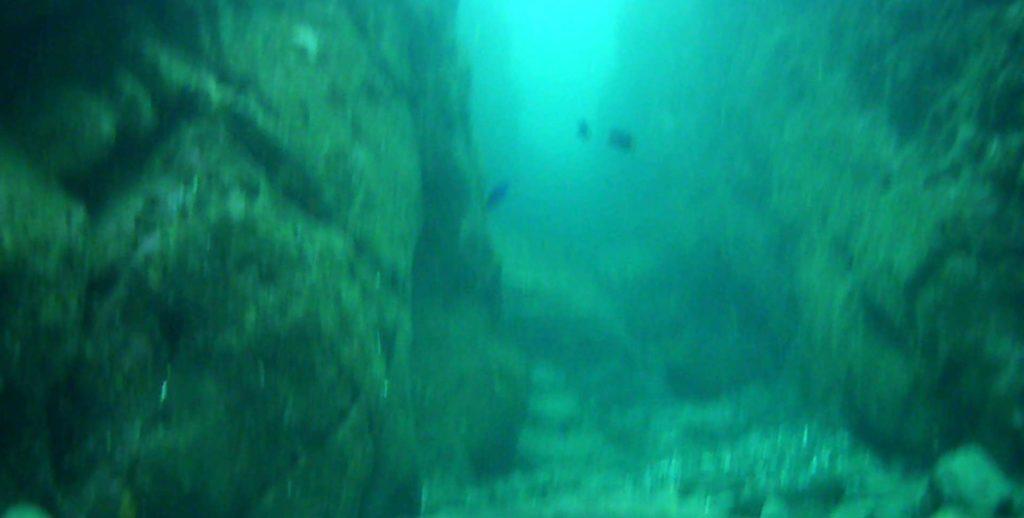 城ケ島 四畳半 水中写真07
