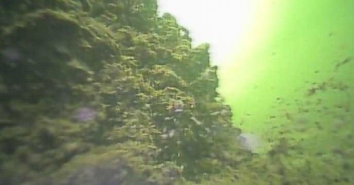 木場公園 水中写真02