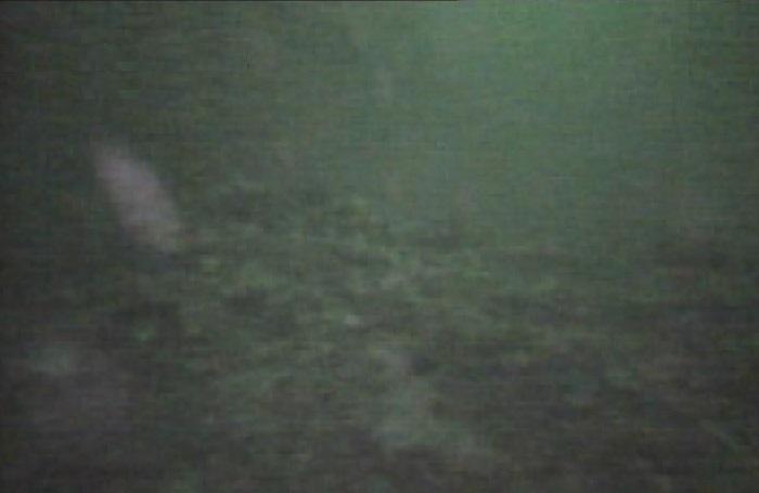 赤レンガパーク 水中写真05