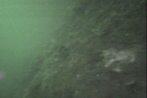 赤レンガパーク 水中写真04