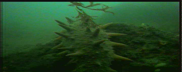 日立港第五埠頭 水中写真03