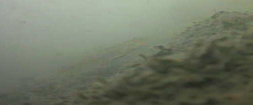 大島川水門 水中写真01