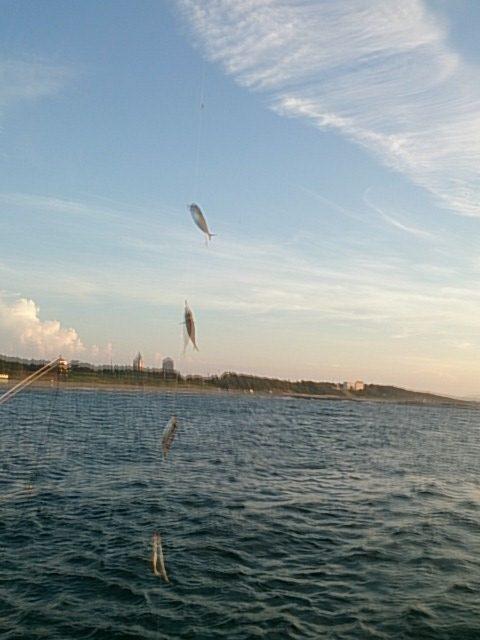 西海岸第一突堤釣果アジ02