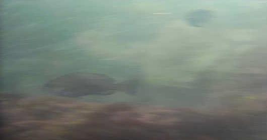 新潟西海岸第一突堤水中写真メジナ