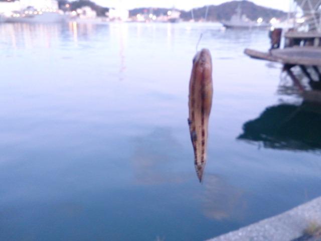 長浦港 釣果