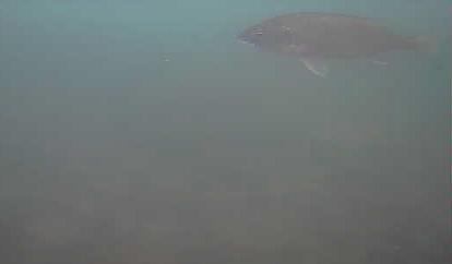 新潟 南浜船だまり 水中写真04