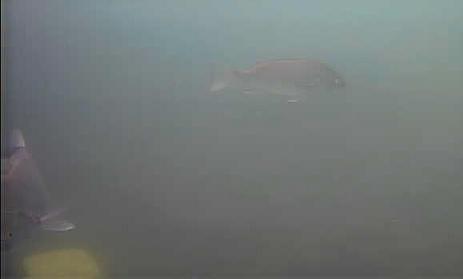 新潟 南浜船だまり 水中写真06