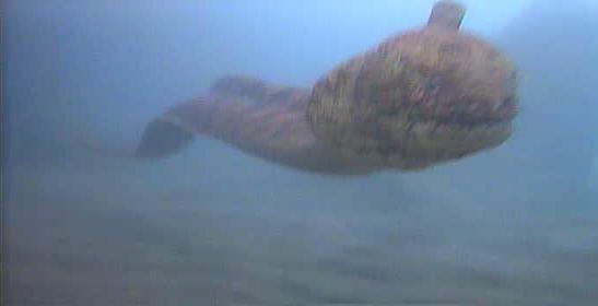 西倉沢漁港 水中写真01