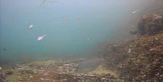 宇品島シーサイド病院前テラス水中写真02