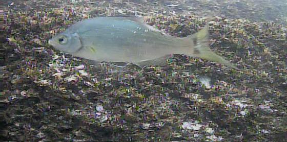 宇品島シーサイド病院前テラス水中写真03