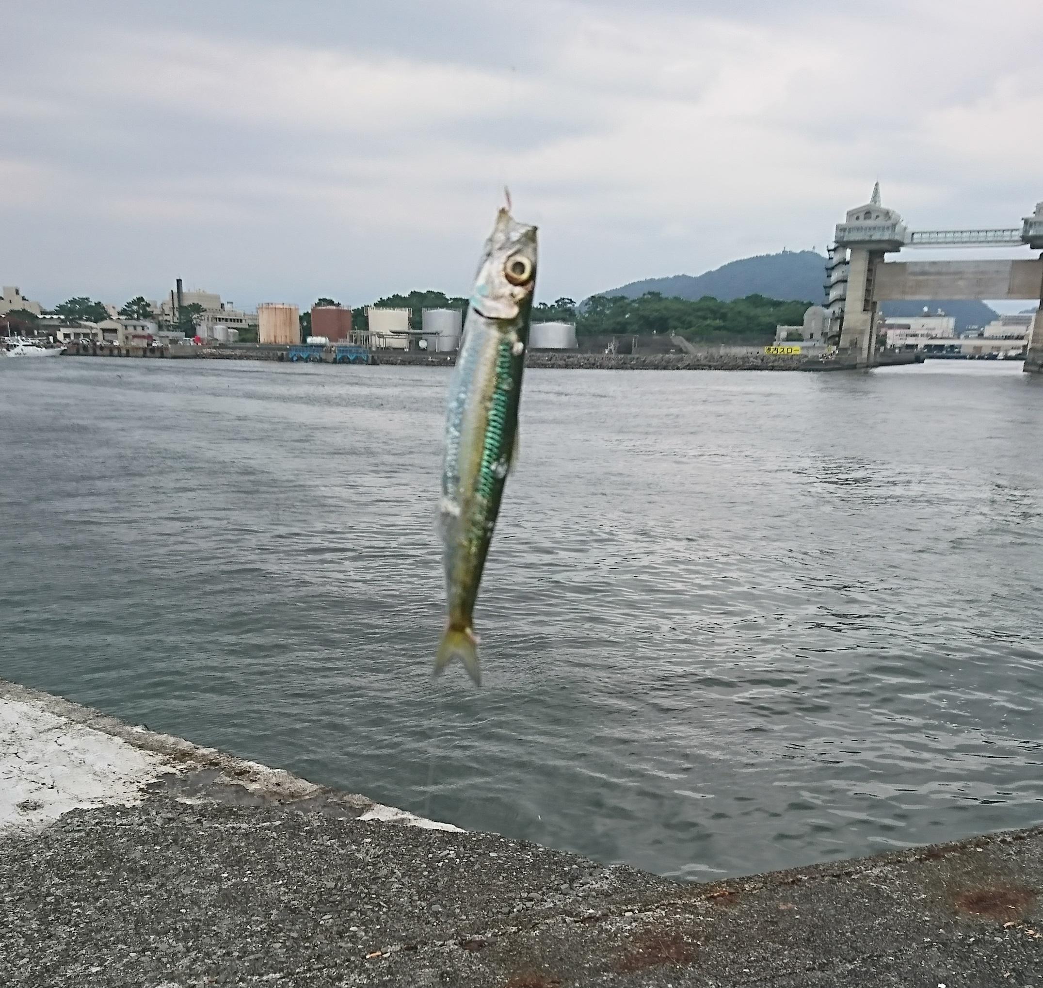 沼津港02