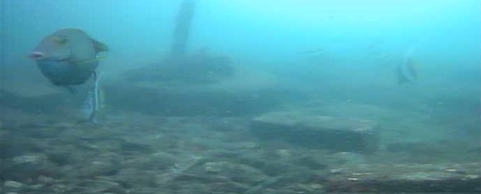 コバルト堤防 水中写真06
