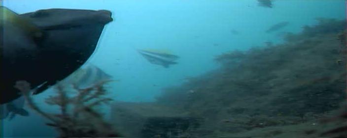 コバルト堤防 水中写真07