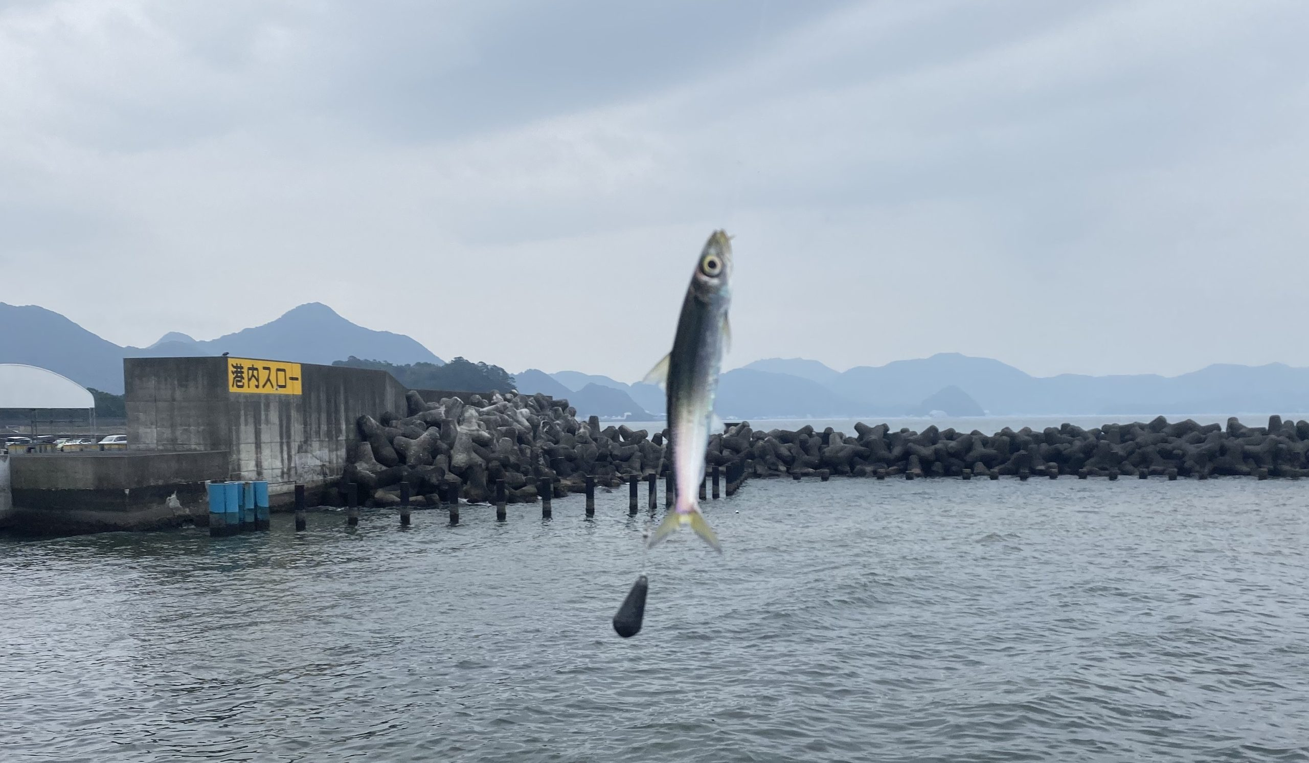沼津港06
