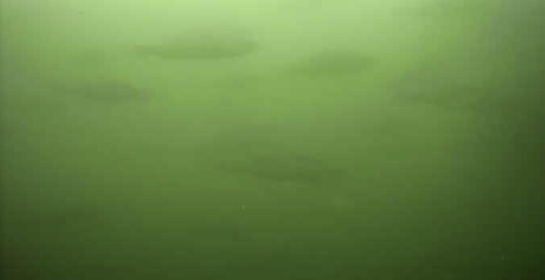田原港 水中写真 セイゴ02