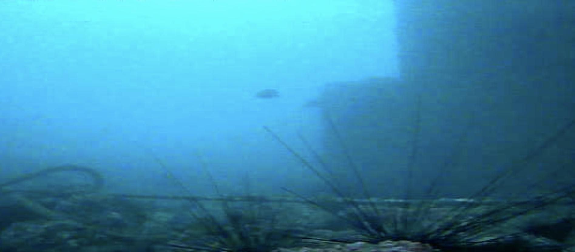 長崎マリア像周辺 水中写真03