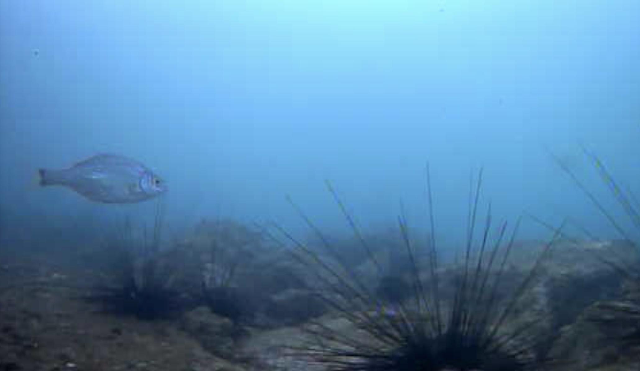 大洋食品前護岸水中写真01