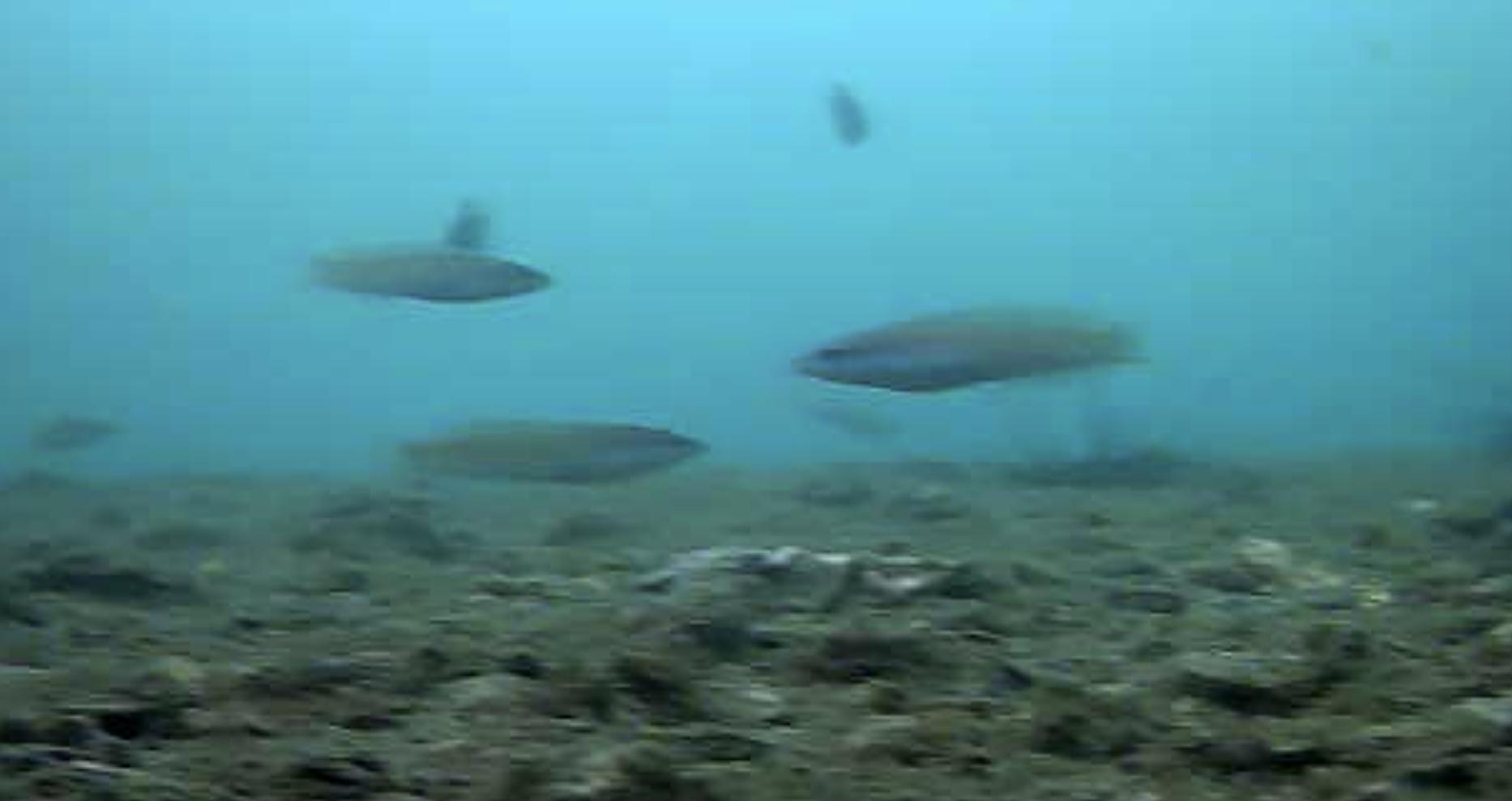 大洋食品前護岸水中写真02