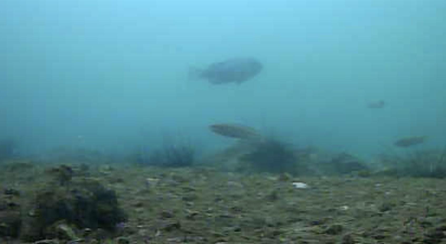 大洋食品前護岸水中写真04
