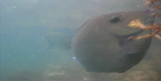 仁科漁港 水中写真06