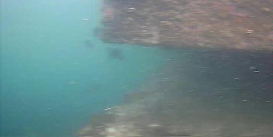 仁科漁港 水中写真 海底付近