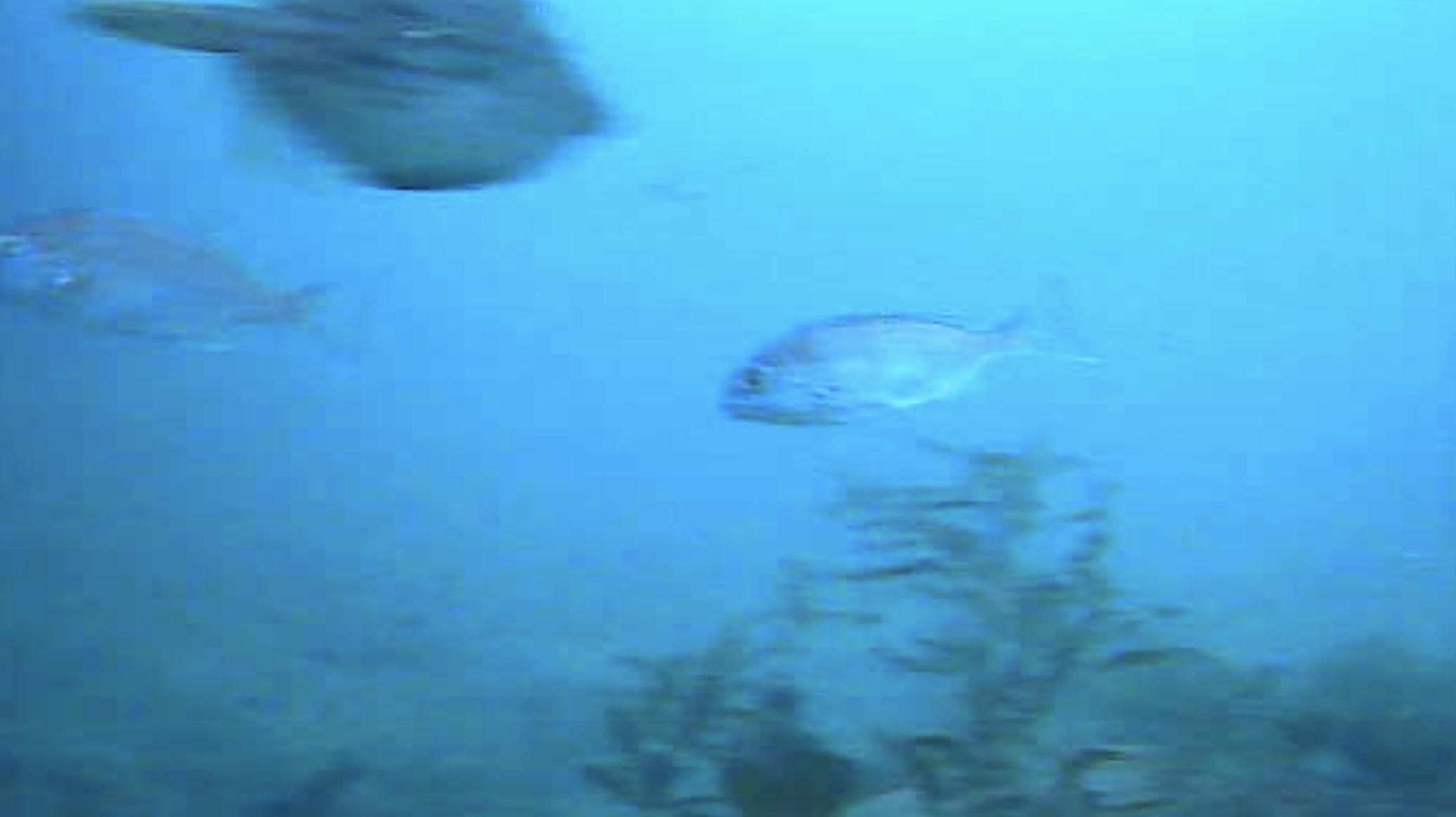大可賀釣り公園 水中写真01