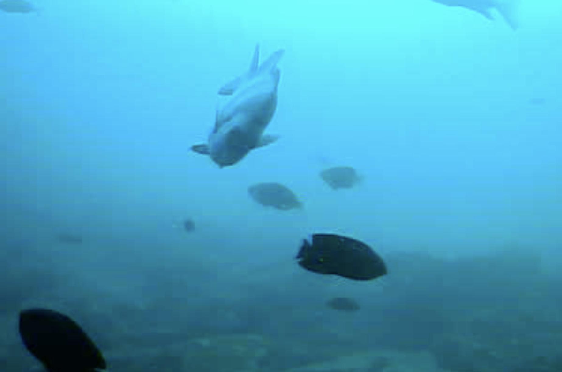 伊王島港 水中写真01