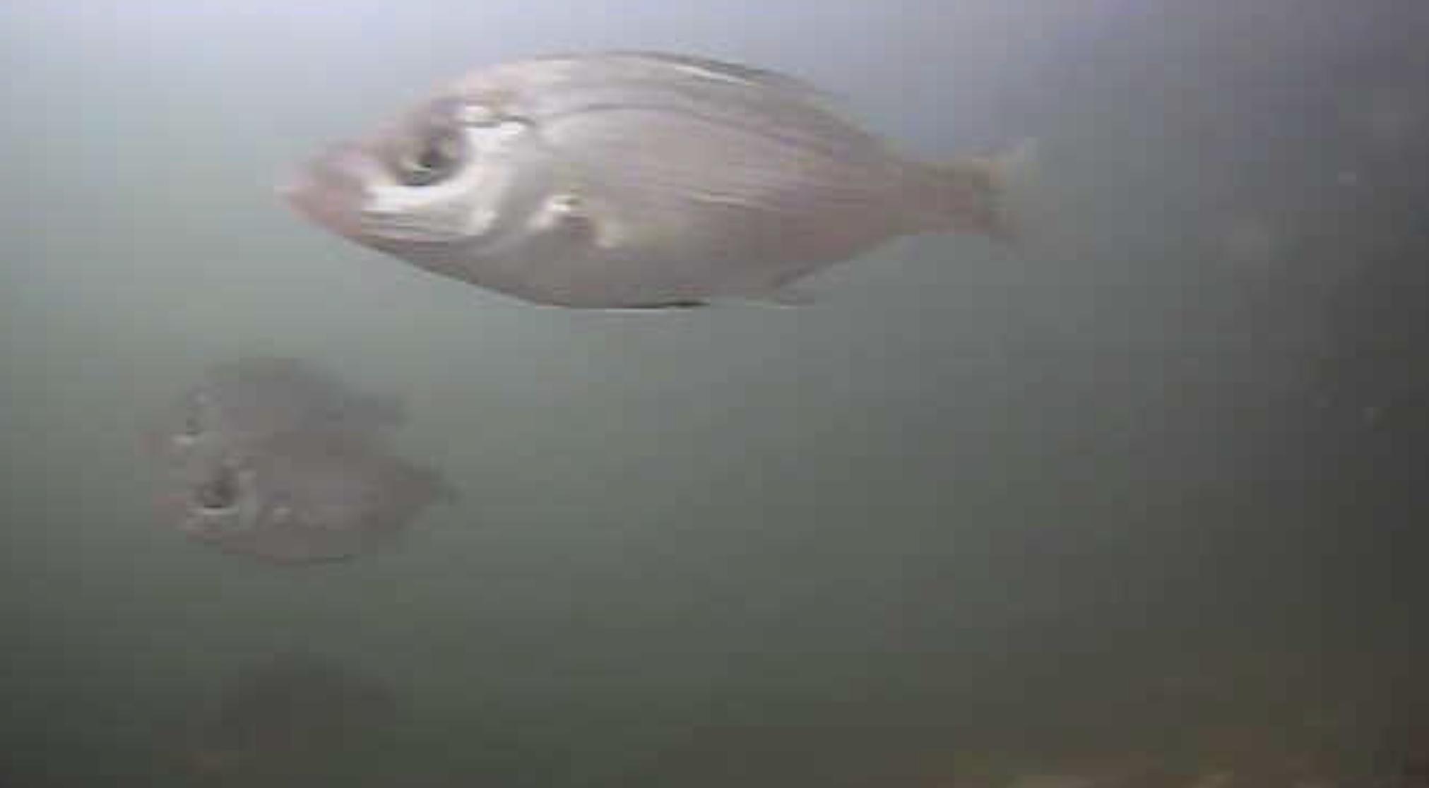 姪浜港マリナ大橋下 水中写真05
