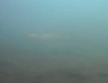 豊美運動公園水中写真01