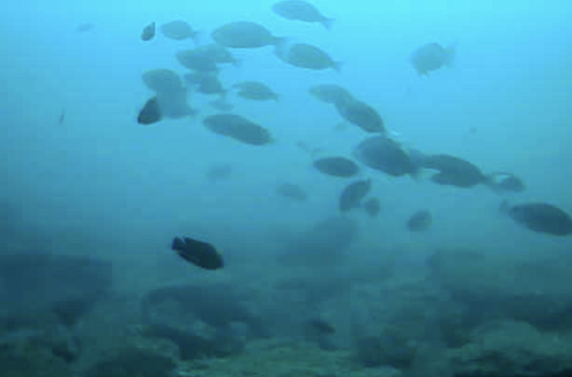 伊王島ふれアイランド前水中写真01