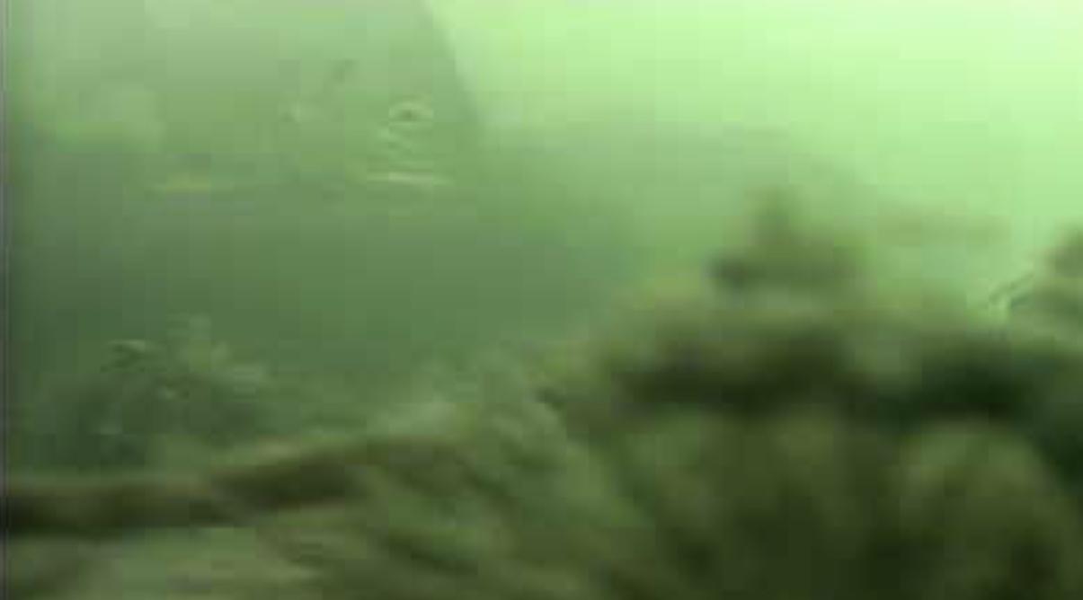 姪浜港 能古渡船横堤防 水中写真08