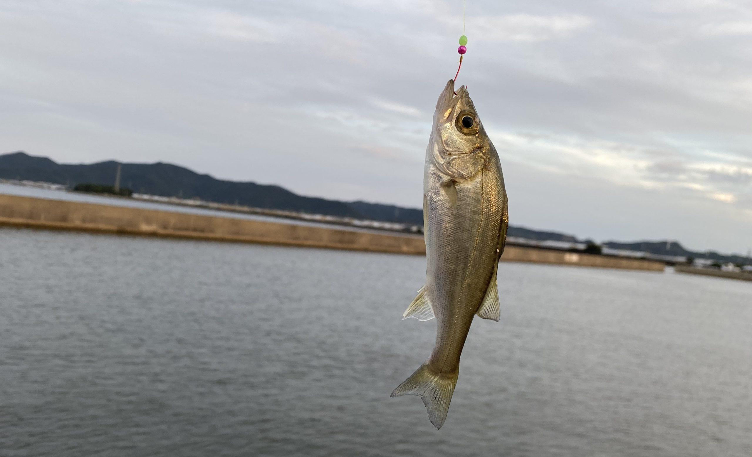 福江漁港 釣果01