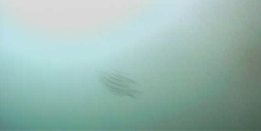 赤羽根港 水中写真01