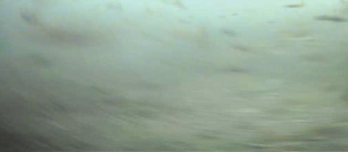 赤羽根港 水中写真04