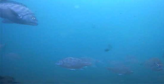 晴海臨海公園水辺のテラス 水中写真06