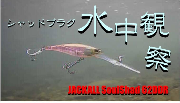 水中観察 JACKALL SoulShad 62DDR