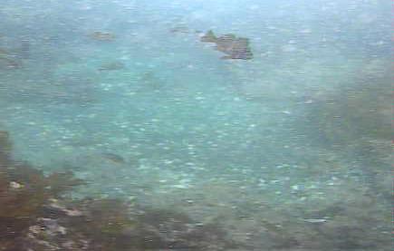 城ヶ島潮見 水中写真04