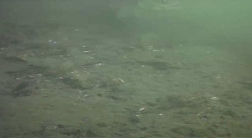有明北緑道公園 水中写真 海底シーバス