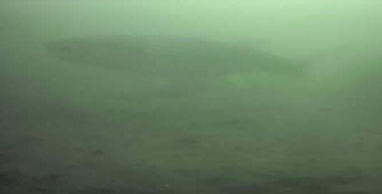 有明北緑道公園 水中写真 ボラ