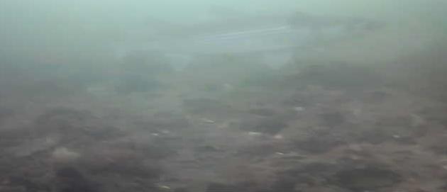 有明北緑道公園 水中写真 ボラ02