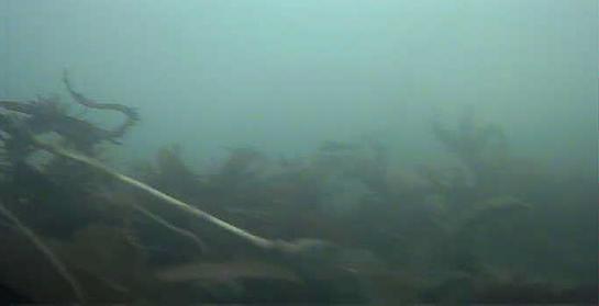 吉田港 水中写真 海底