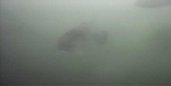 津久井湖 三井大橋下 水中映像 ブラックバス