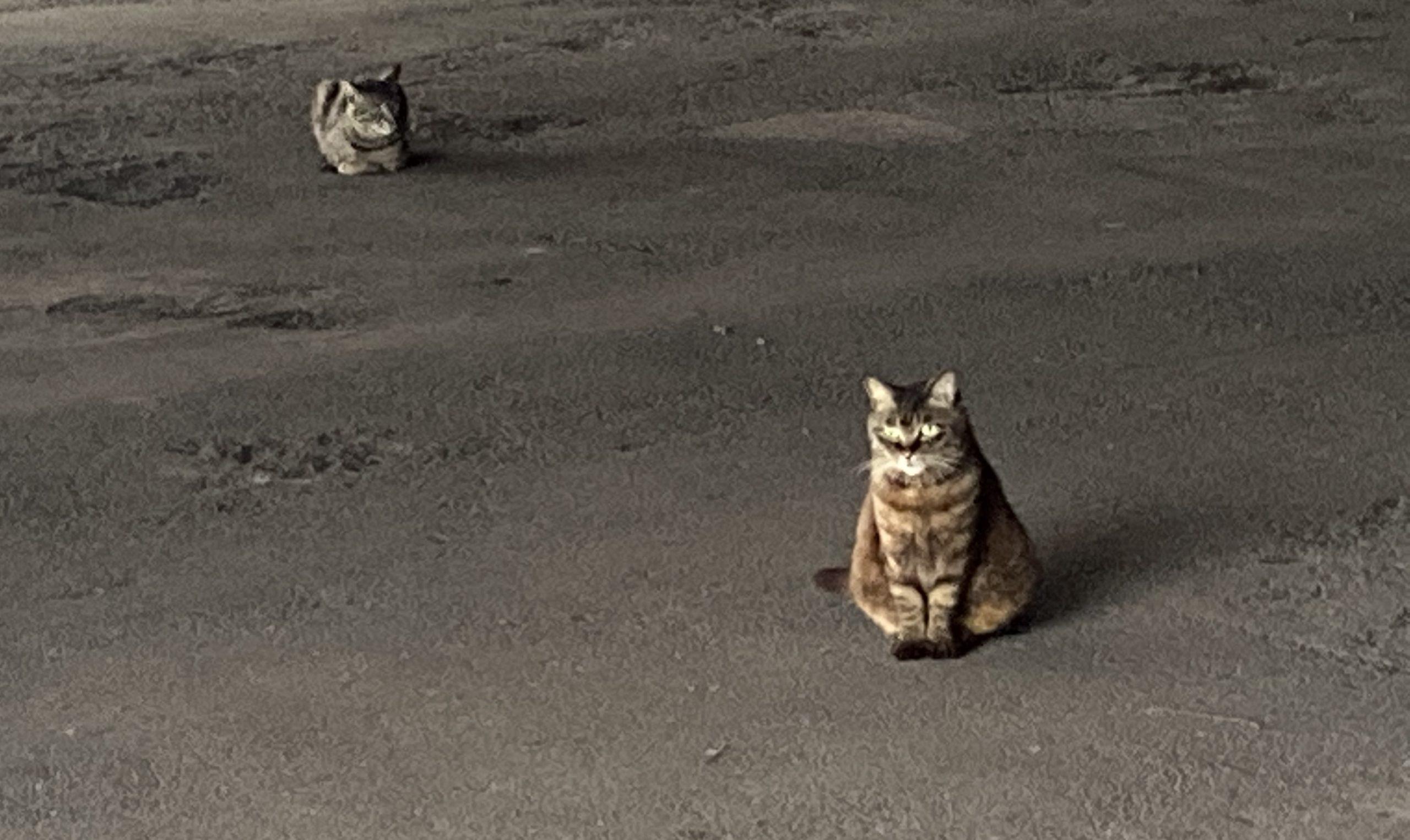 京浜島緑道公園ネコ