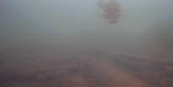 津久井湖 中村ボート横 ブラックバス水中画像03