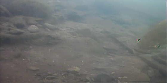 津久井湖 中村ボート横 ブラックバス水中画像05